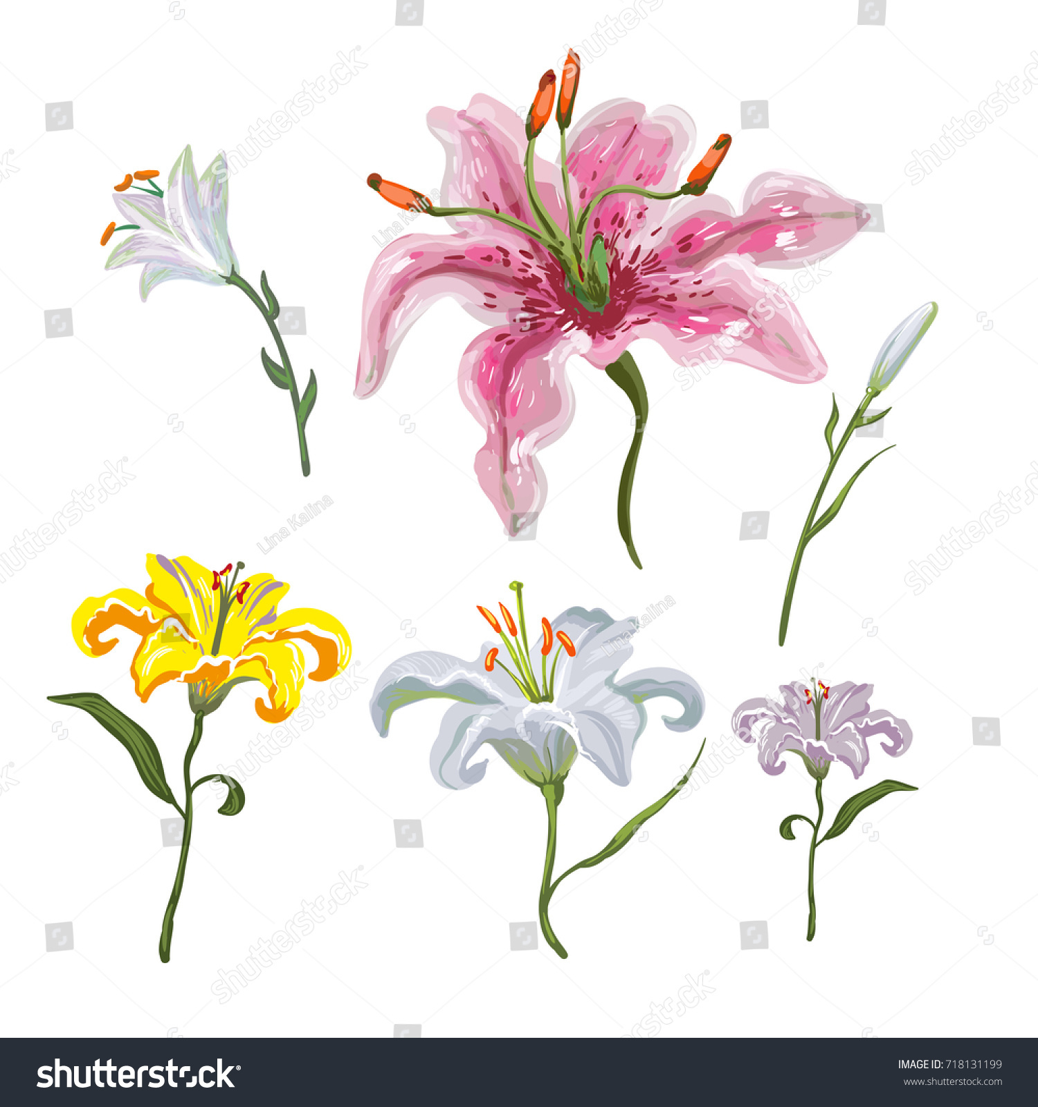 Colorful Of Lilies Flower On White Background Adornment For Wedding