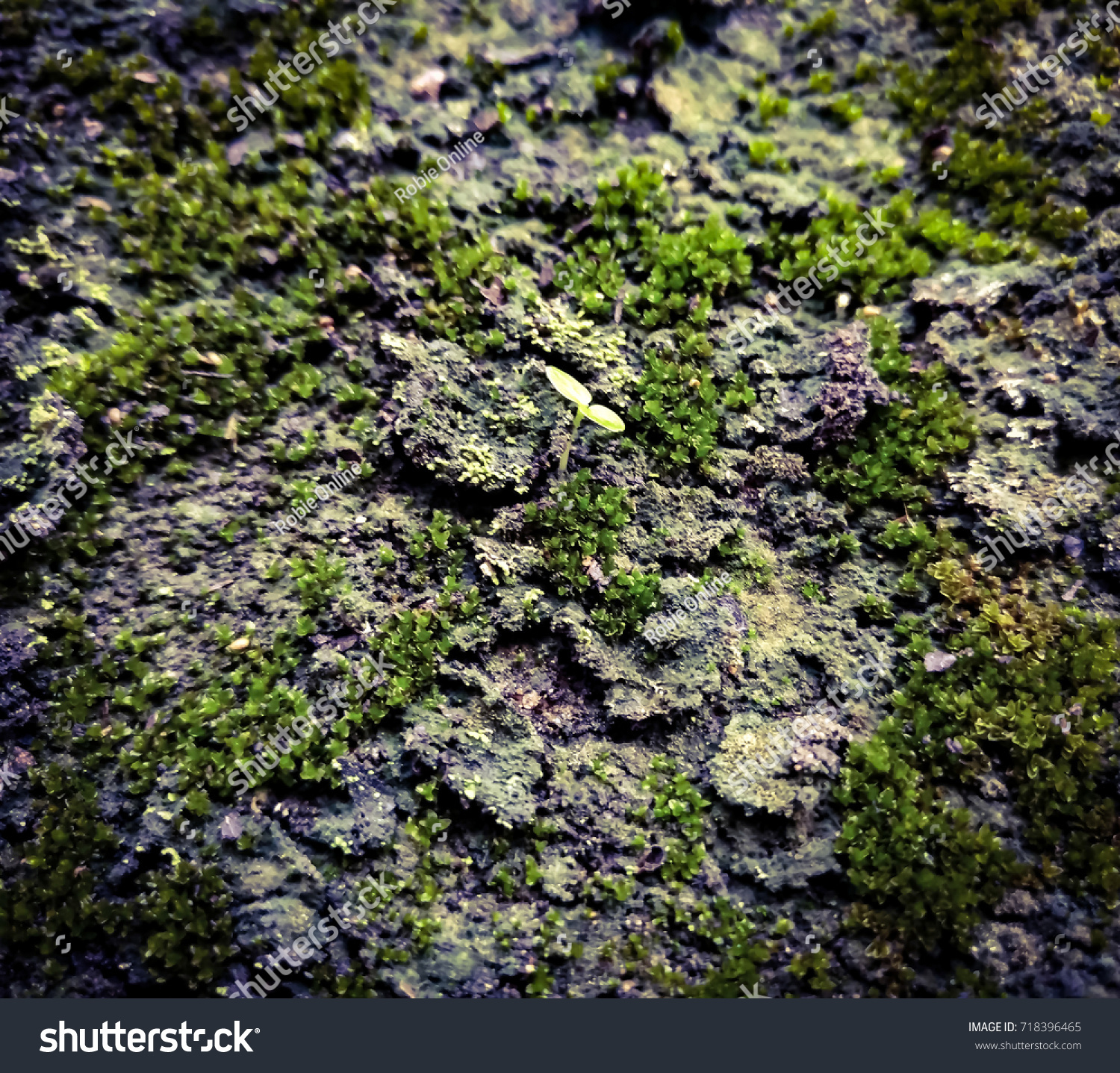 Small Plant Growing On Wall Green Stock Photo Edit Now 718396465