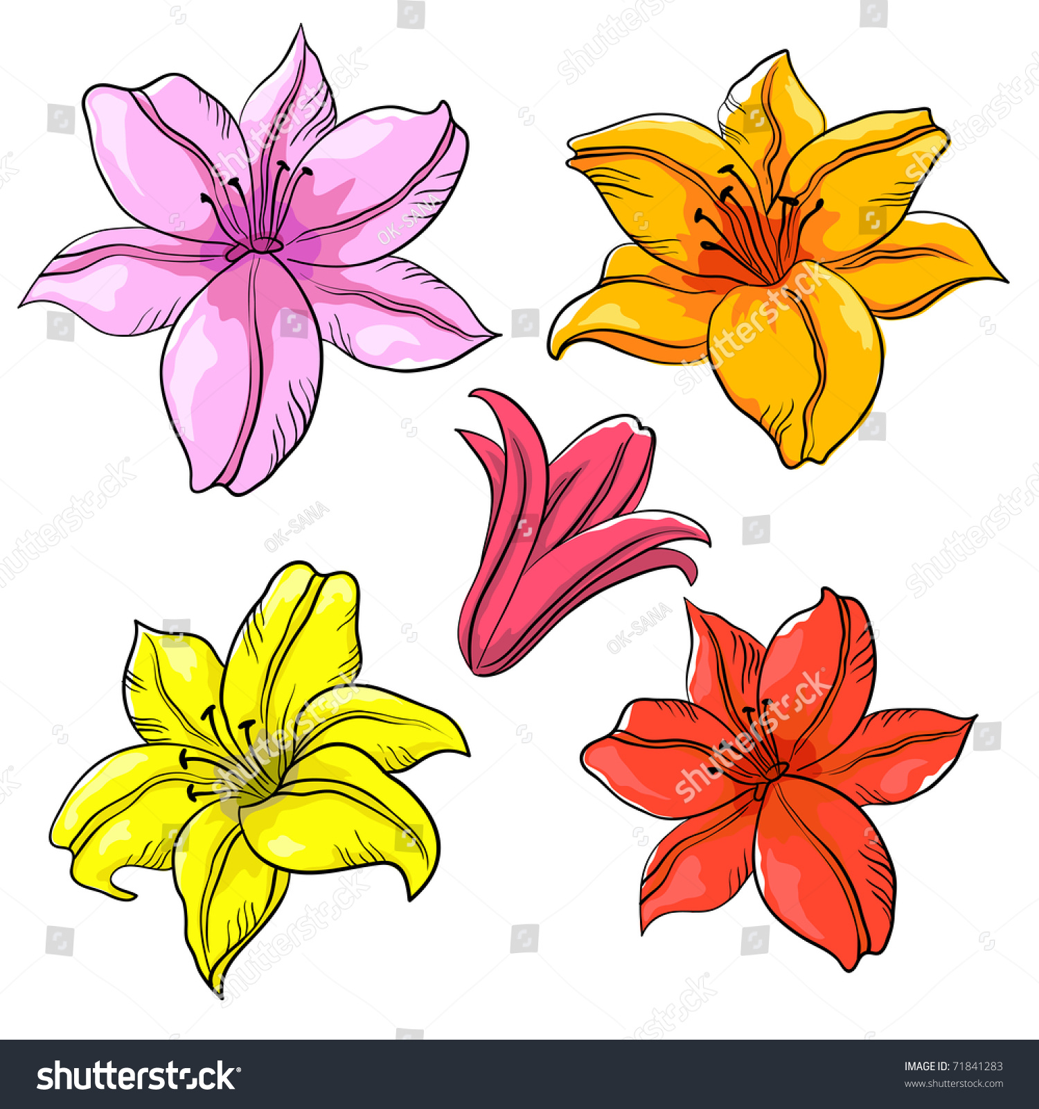 Flowers Lily Multicoloured Isolated Drawing Set Stock Illustration
