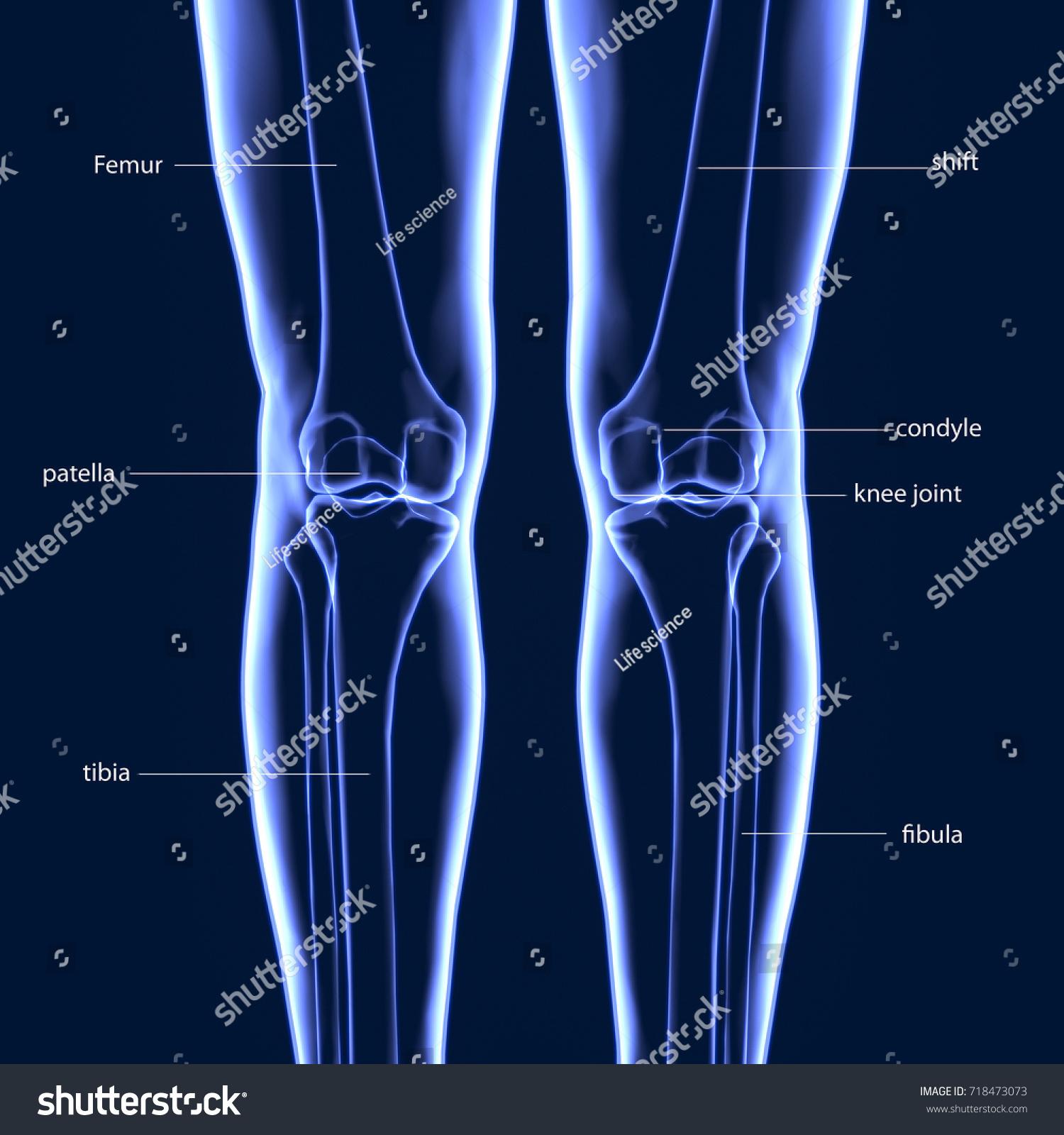3 D Illustration Human Body Leg Bones Stock Illustration 718473073