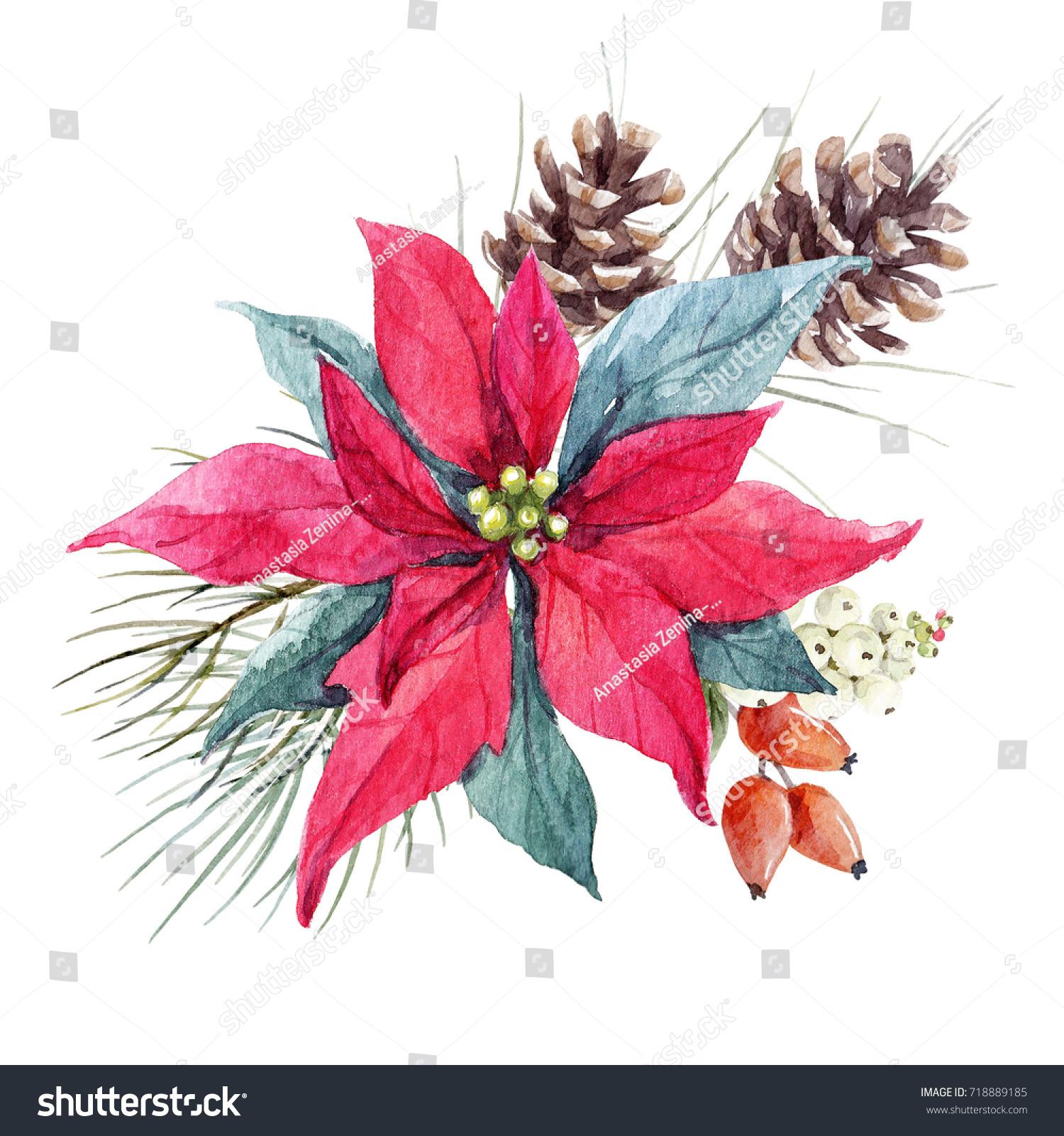 Watercolor Christmas Illustration Flower Poinsettia Spruce ...