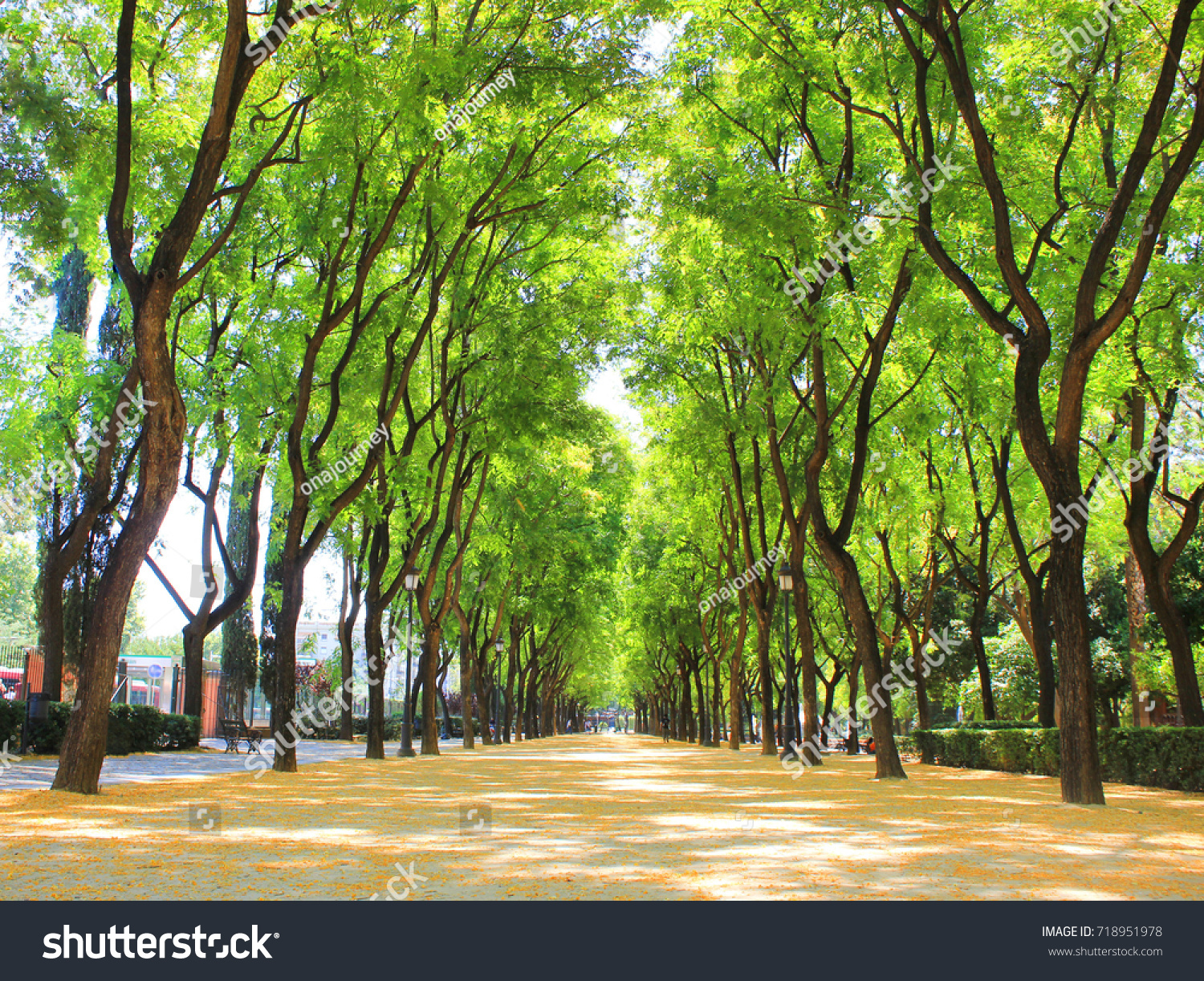 Park Alley Way View Colorful Green Stock Photo (Royalty Free ...