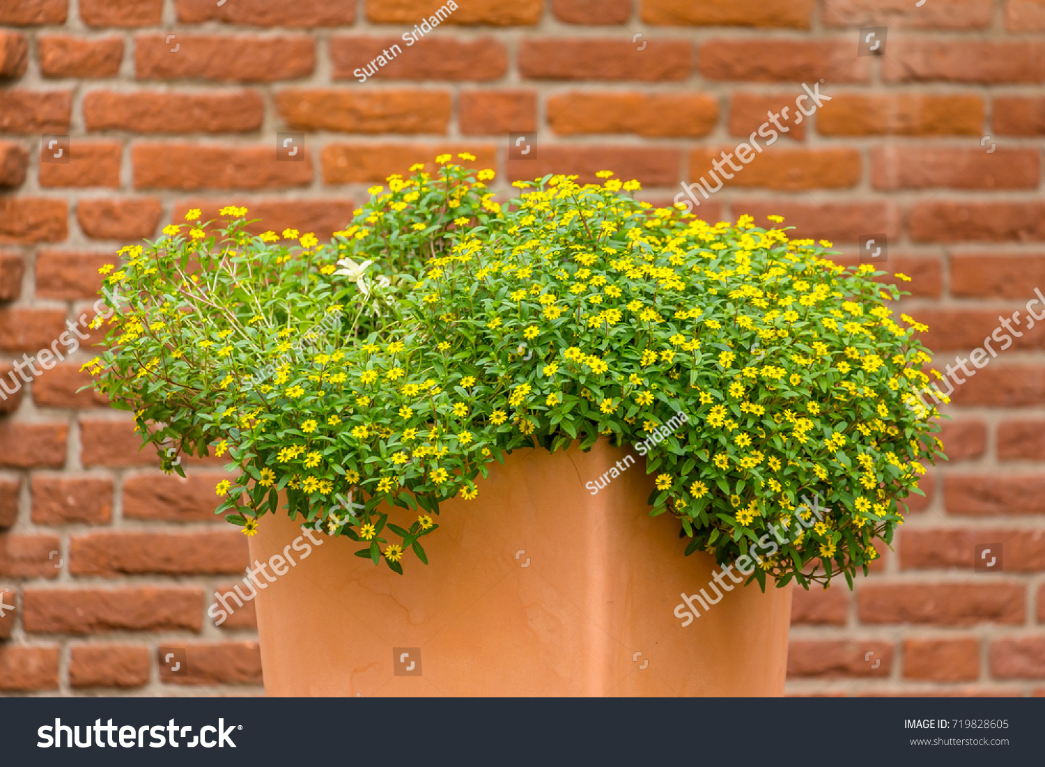 A beautiful flower pot on ground with a beautiful wall.