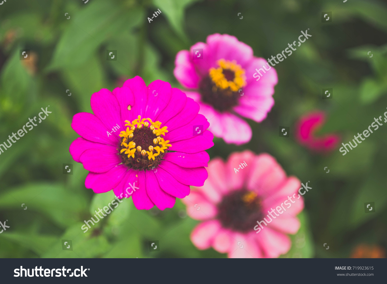 Beautyfull Flower Stock Photo Edit Now 719923615 Shutterstock