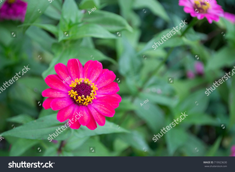 Beautyfull Flower Stock Photo Edit Now 719923630 Shutterstock