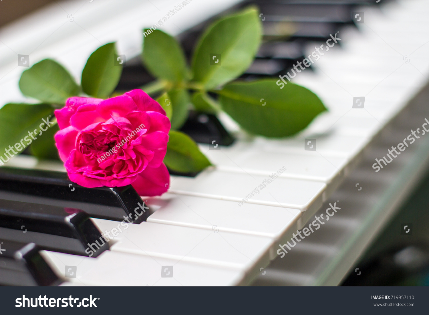 Love Songs Piano Pink Flowers Stock Photo Edit Now 719957110