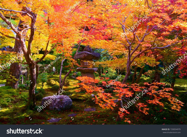 Hokyoin(Houkyouin) Temple zen garden in Kyoto,With fiery maple along ...