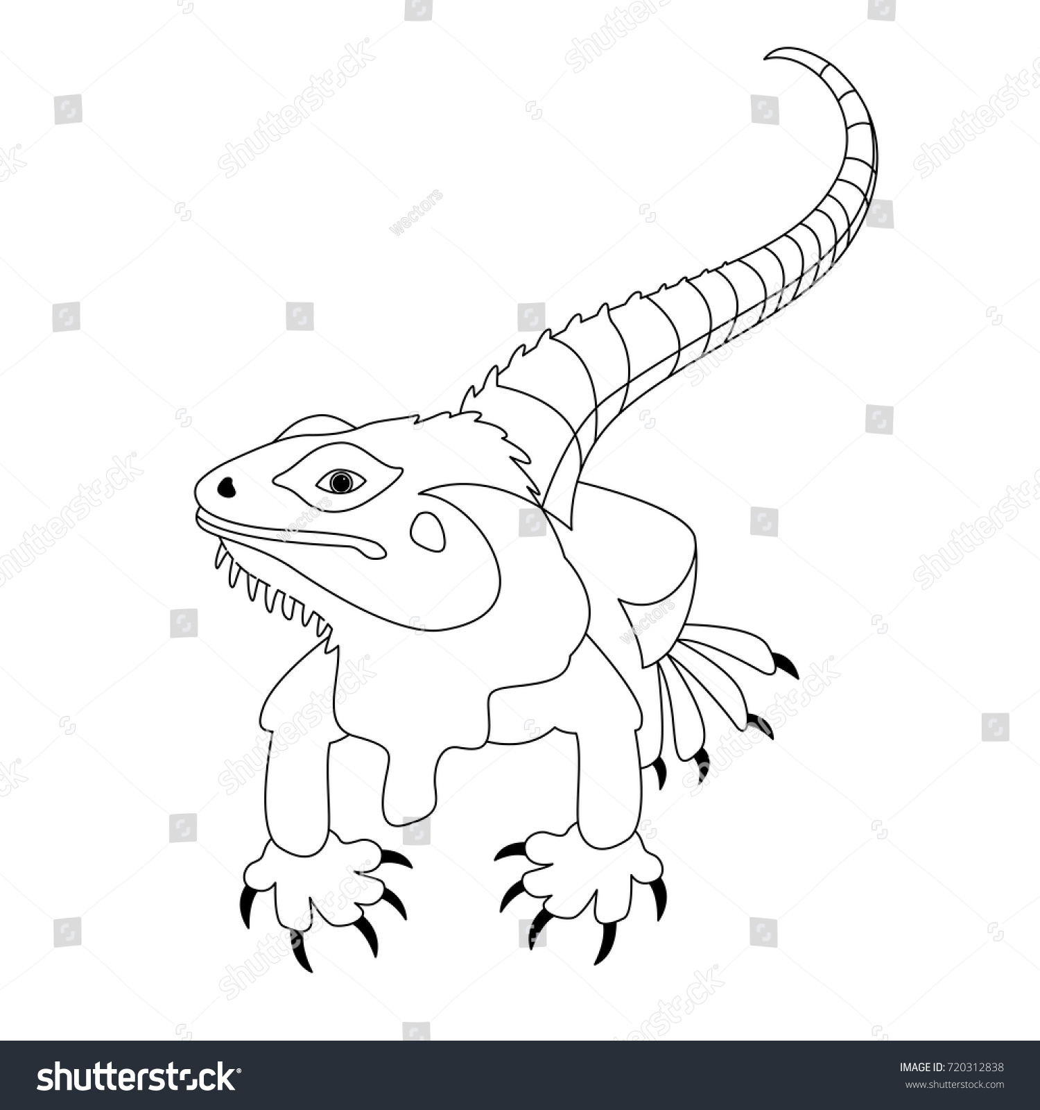 lizard vector illustration line drawing front side