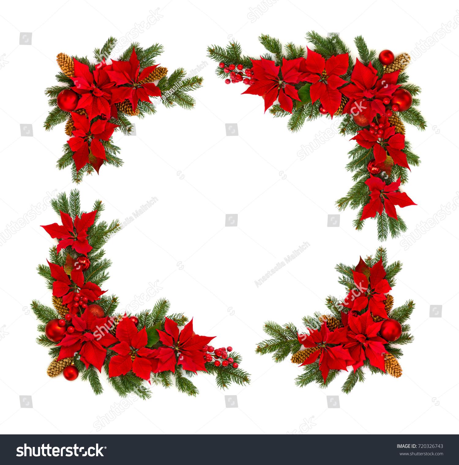 Christmas decoration frame flower red poinsettia stock for Poinsettia christmas tree frame
