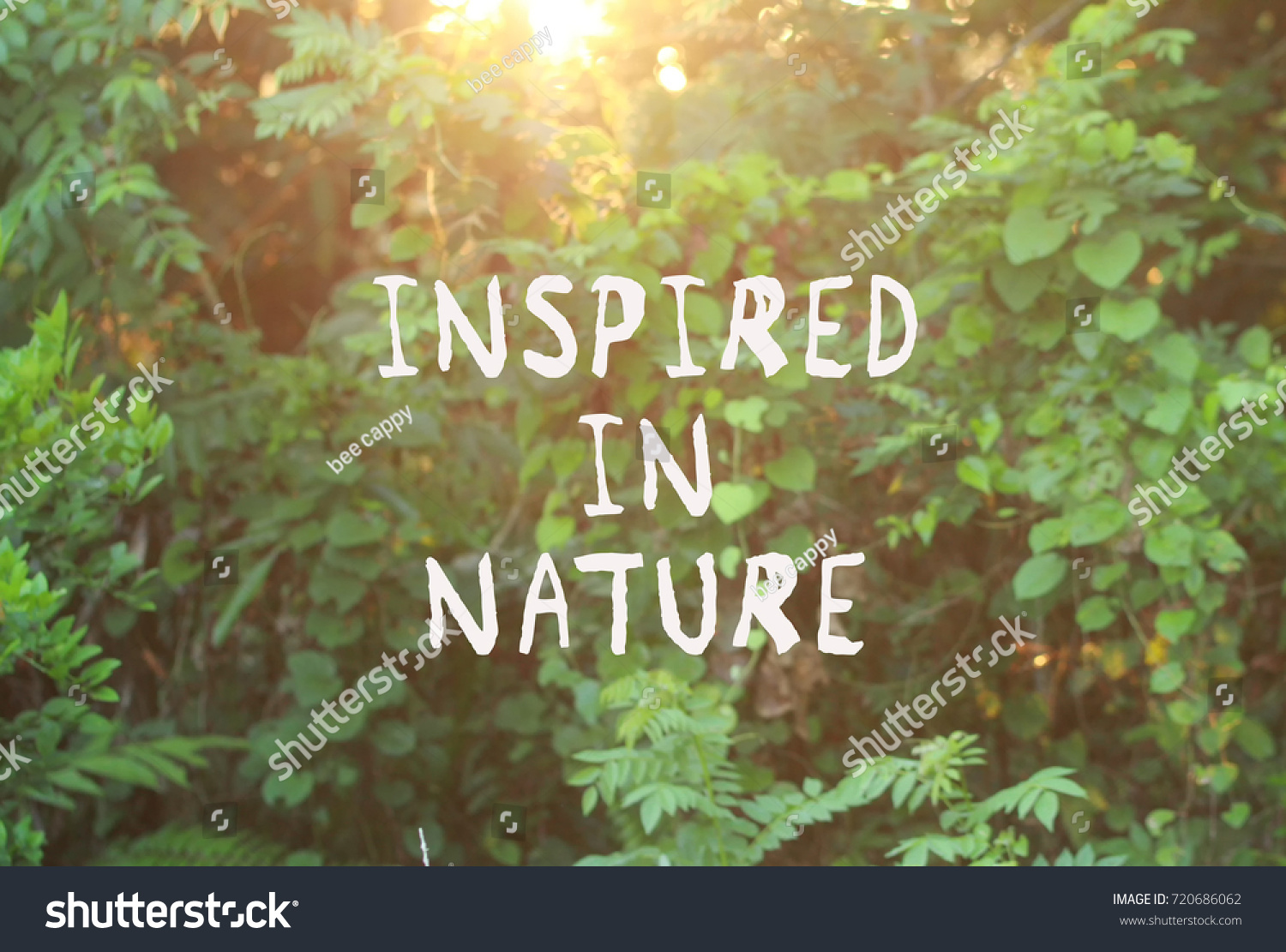 Motivational Quotes Inspired Nature Blurred Background Stock Photo