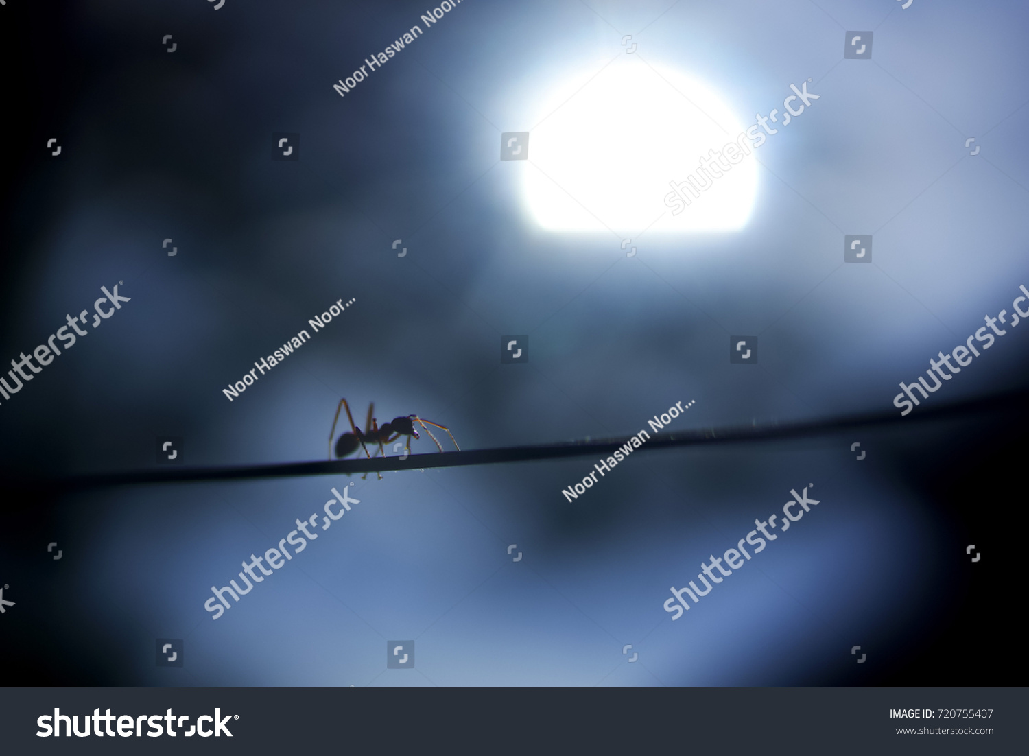Fire Ants Crossing Wire Silhouette Against Stock Photo (Royalty Free ...