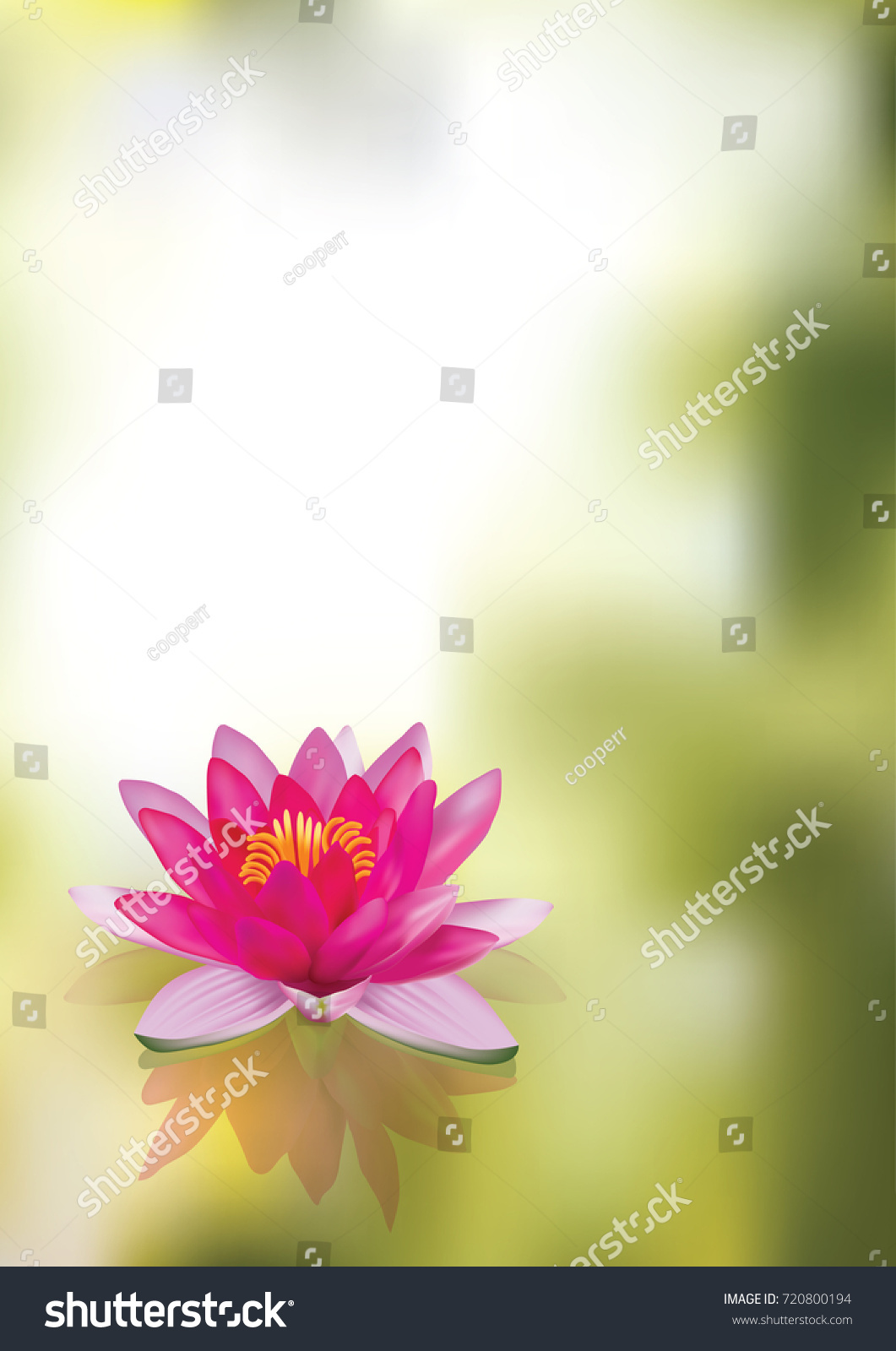 Beautiful Lotus Flower On Water Park Stock Vector Royalty Free