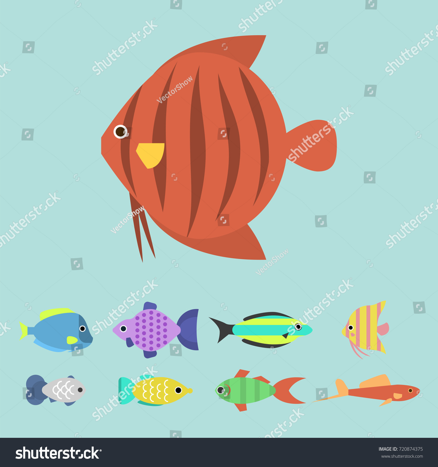 Exotic Tropical Fish Race Different Breed Stock Vector 720874375 ...