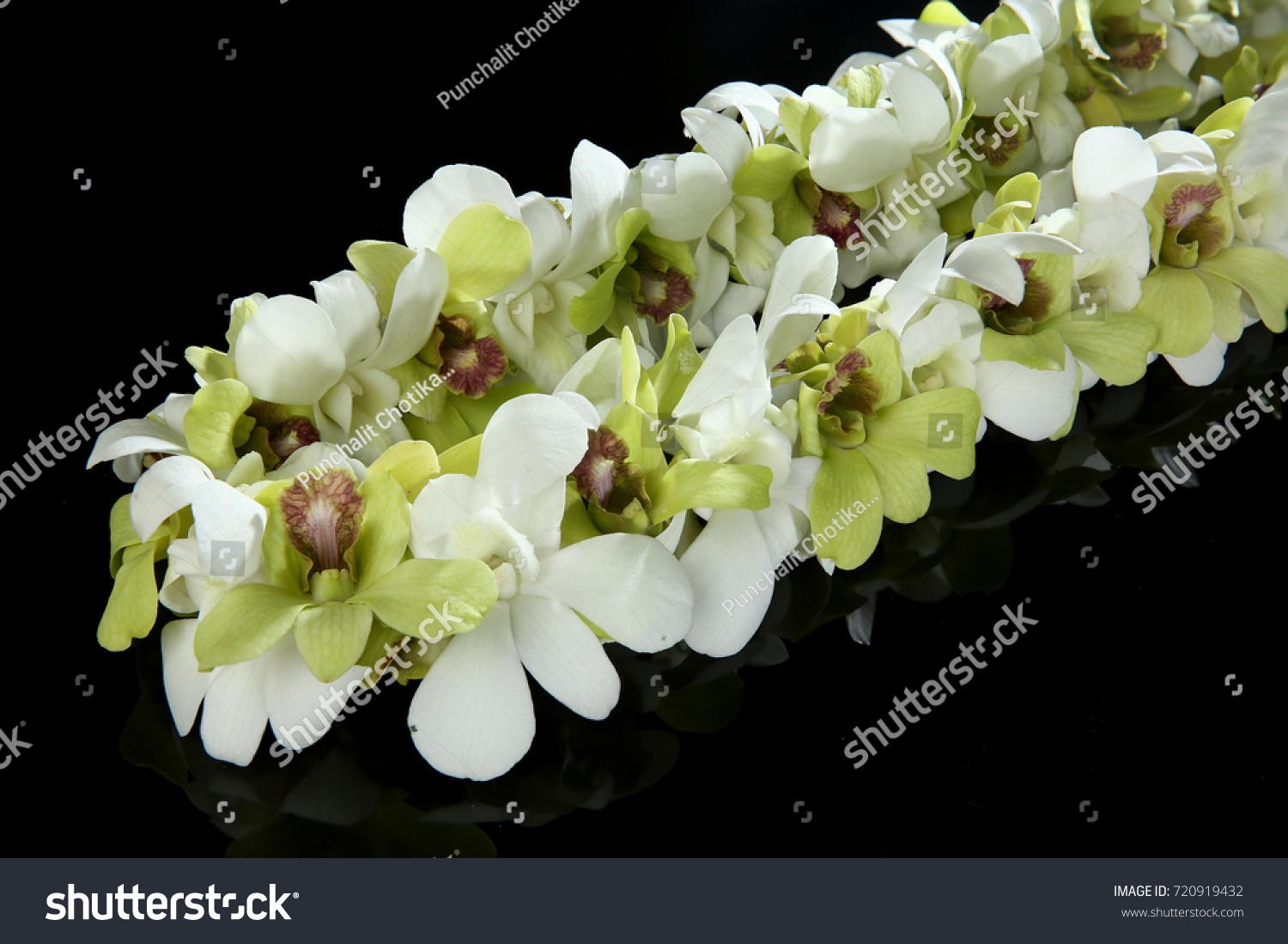 Hawaii flowers lei necklace made orchid stock photo 720919432 hawaii flowers lei necklace made from orchid flower on black background izmirmasajfo Images