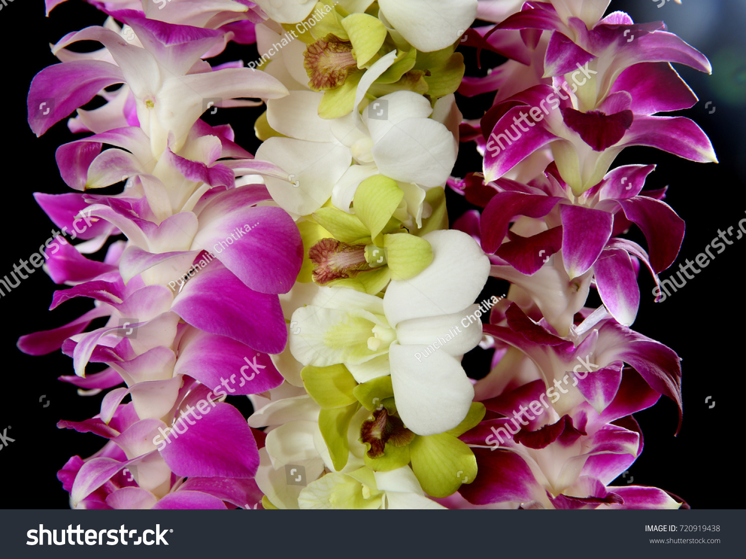 Hawaii flowers lei necklace made orchid stock photo royalty free hawaii flowers lei necklace made from orchid flower on black background izmirmasajfo Images