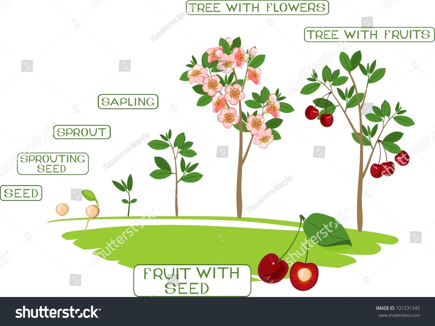 how to start growing an apple tree from seed
