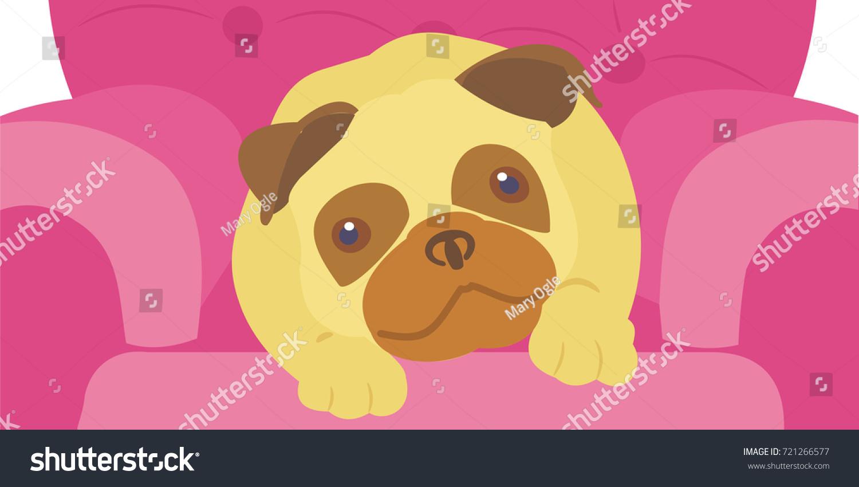 Fawn Pug Lying On A Big Pink Chair