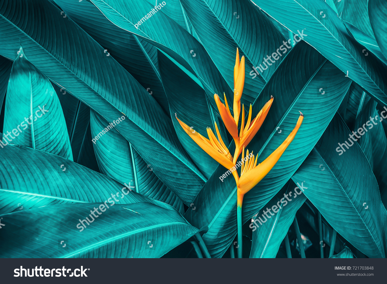 colorful flower on dark tropical foliage nature background