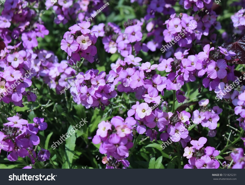 Outside Bush With Small Purple Flowers Ez Canvas