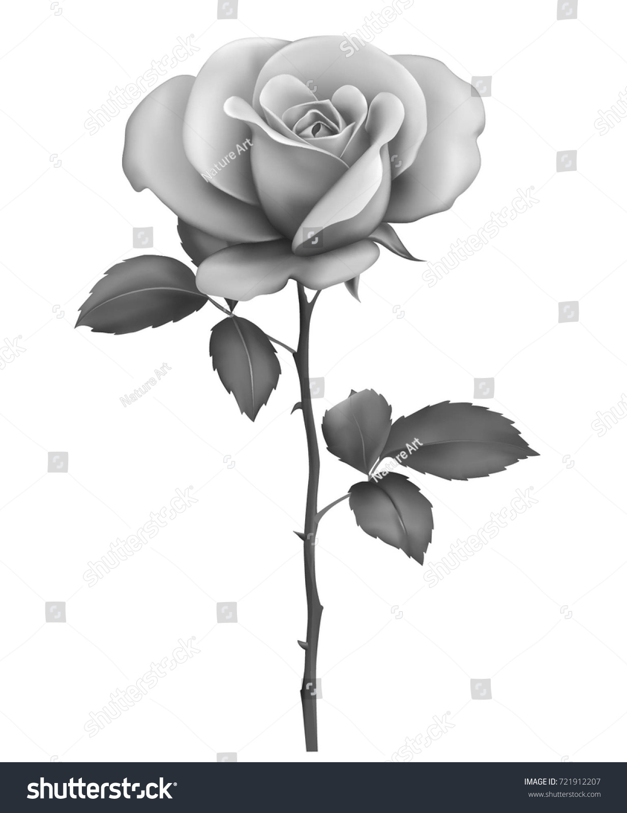 Beautiful sexy black and white rose with stem and leaves isolated on white background photo realistic gradient mesh vector illustration in shades of grey