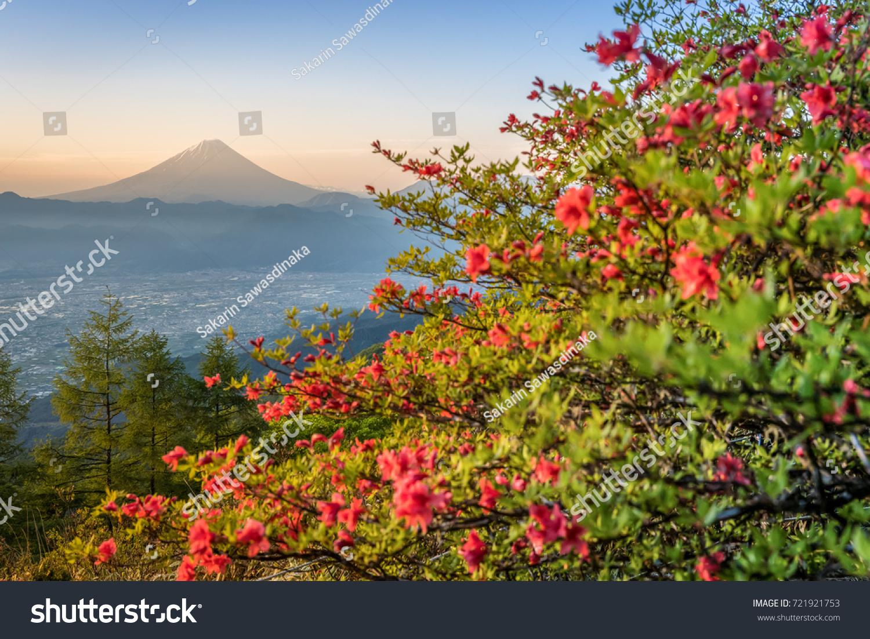 Japanese Azalea Flower Mountain Fuji Spring Stock Photo Edit Now