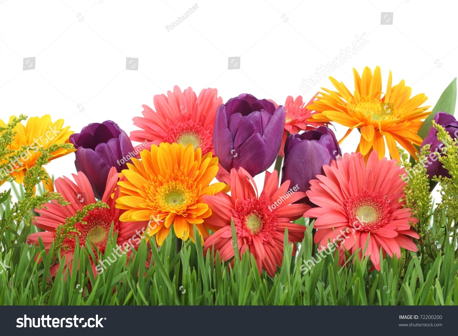 Spring flowers background stock photo royalty free 72200200 spring flowers background mightylinksfo