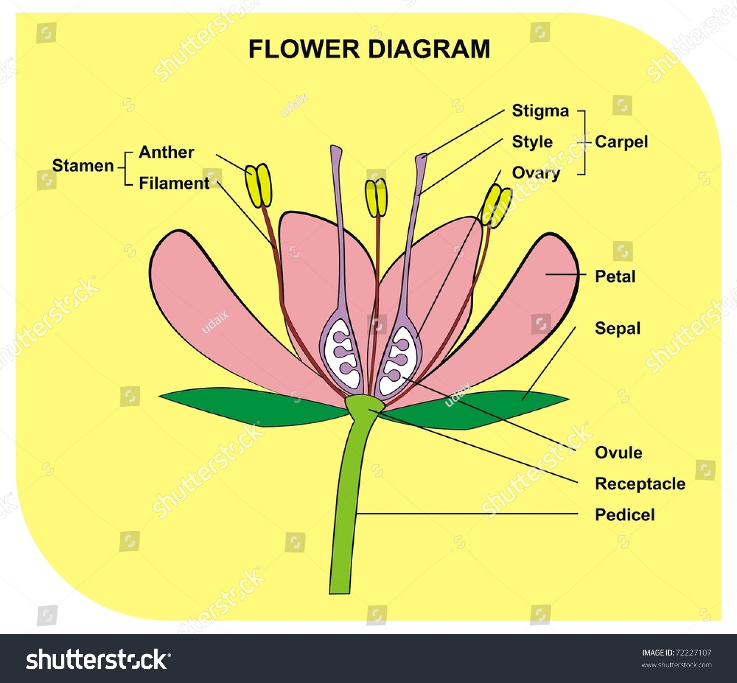 Vector flower diagram useful school student stock vector 72227107 vector flower diagram useful for school and student pooptronica Images