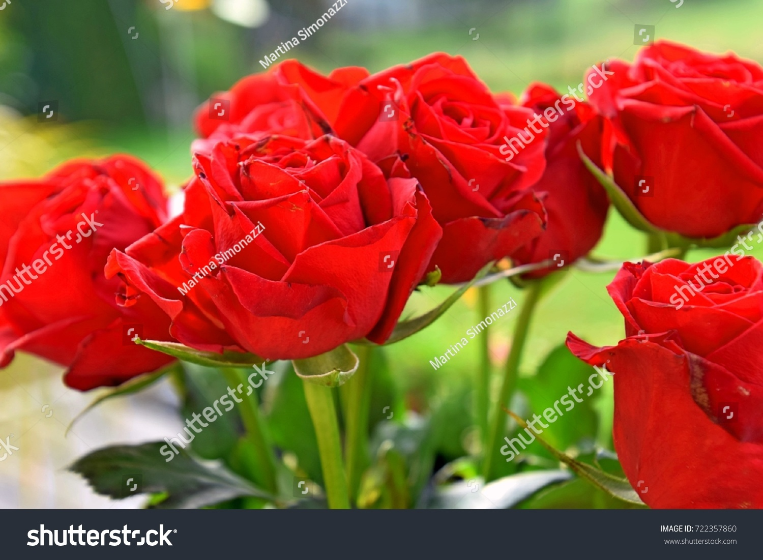 Red rose roses red symbol love stock photo 722357860 shutterstock red rose roses are red symbol of love buycottarizona