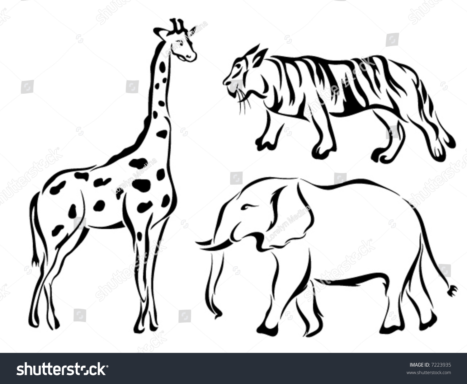 Line Art Jungle Animals : Line art vector animal series zoosafari stock