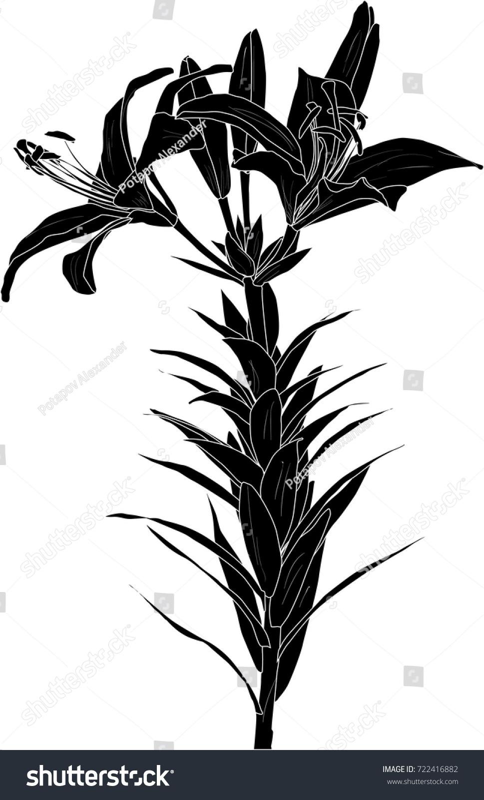 Illustration black lily flower silhouette isolated stock vector illustration with black lily flower silhouette isolated on white background izmirmasajfo