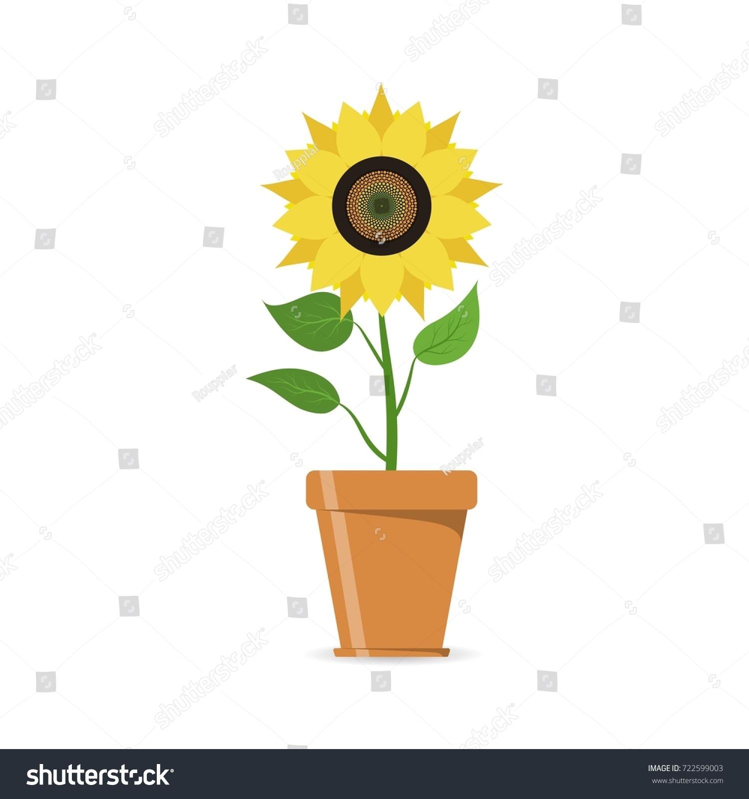 Sunflower Flowerpot Icon Yellow Flower Pot Stock Vector Royalty
