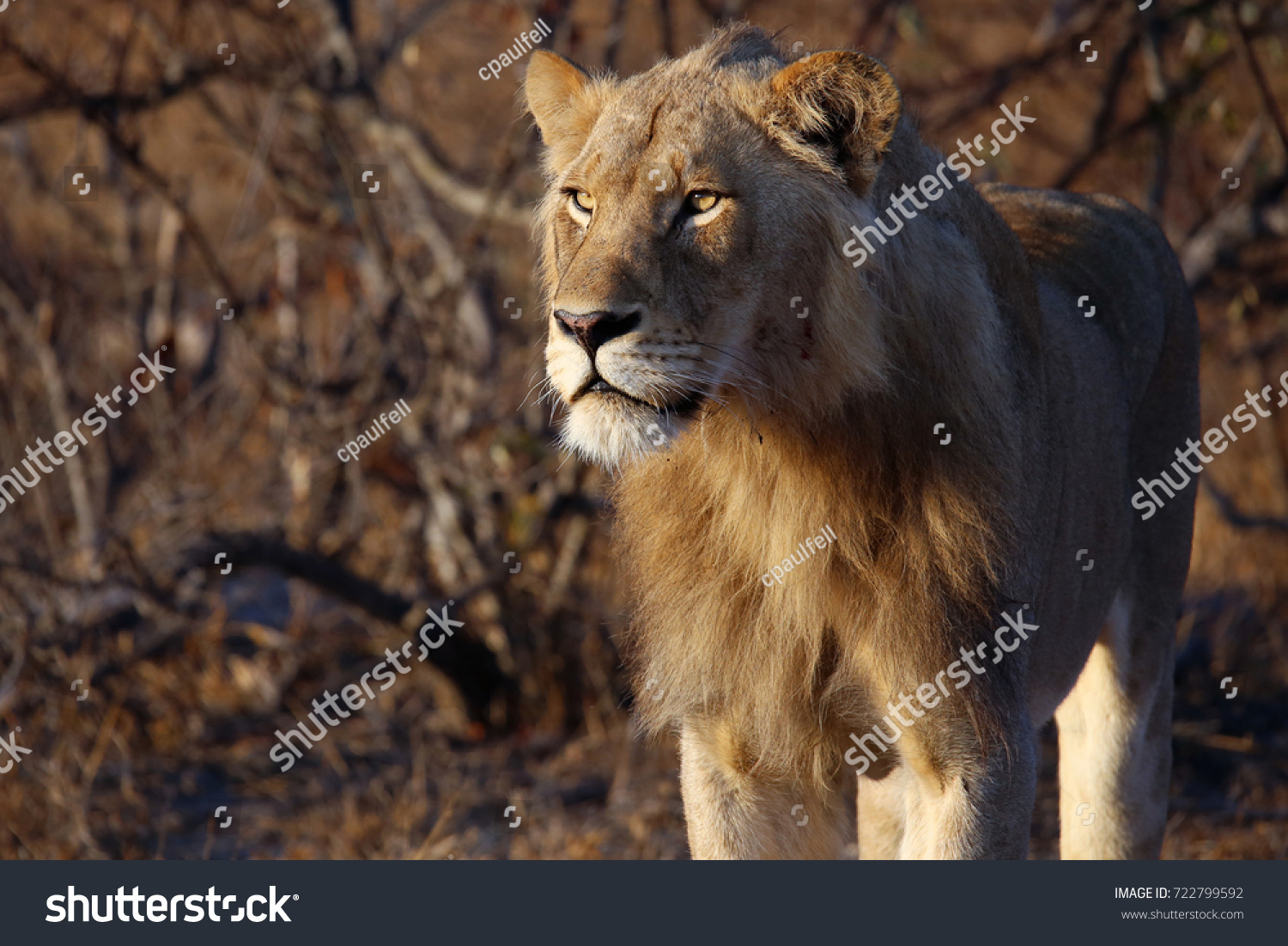 stock-photo-portrait-of-a-male-african-l