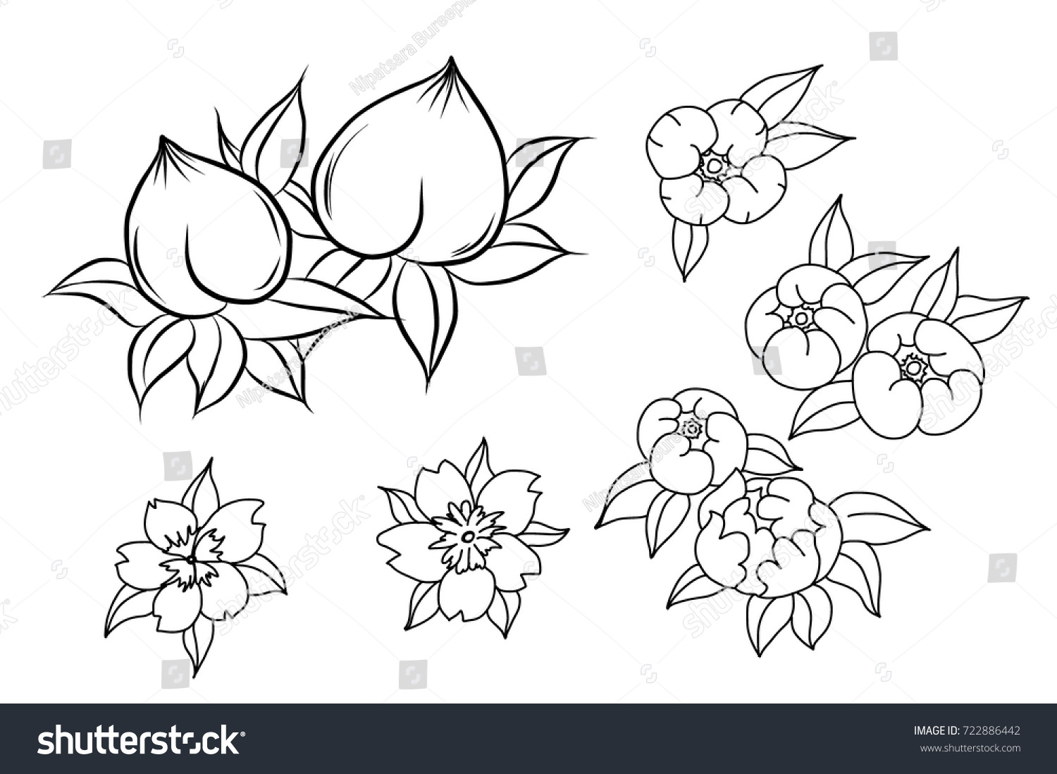 Black White Peach Flower Tattoo Chinese Flower Stock Vector Royalty