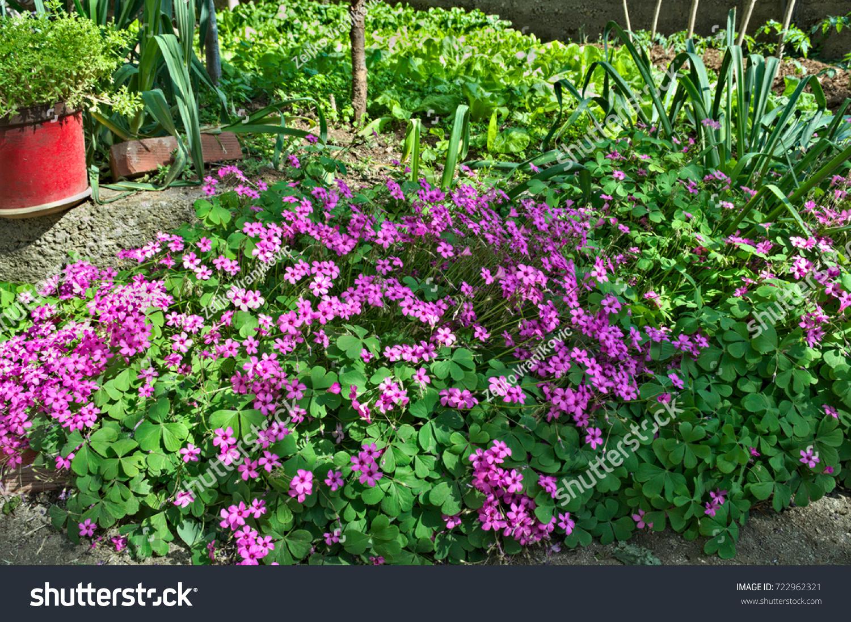 Small Purple Flowers In Garden On Spring Sun Ez Canvas