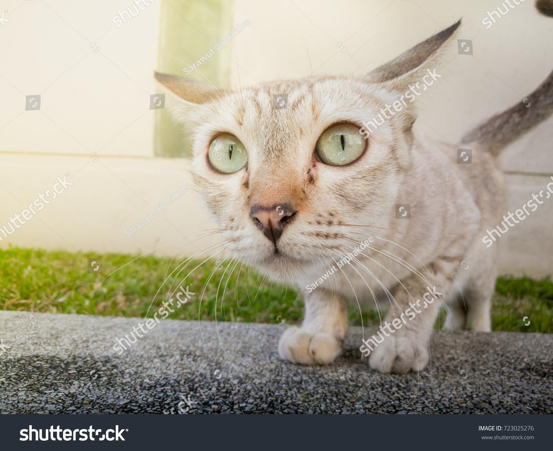 Action Animal Themes Cat Closeup Cute Stock
