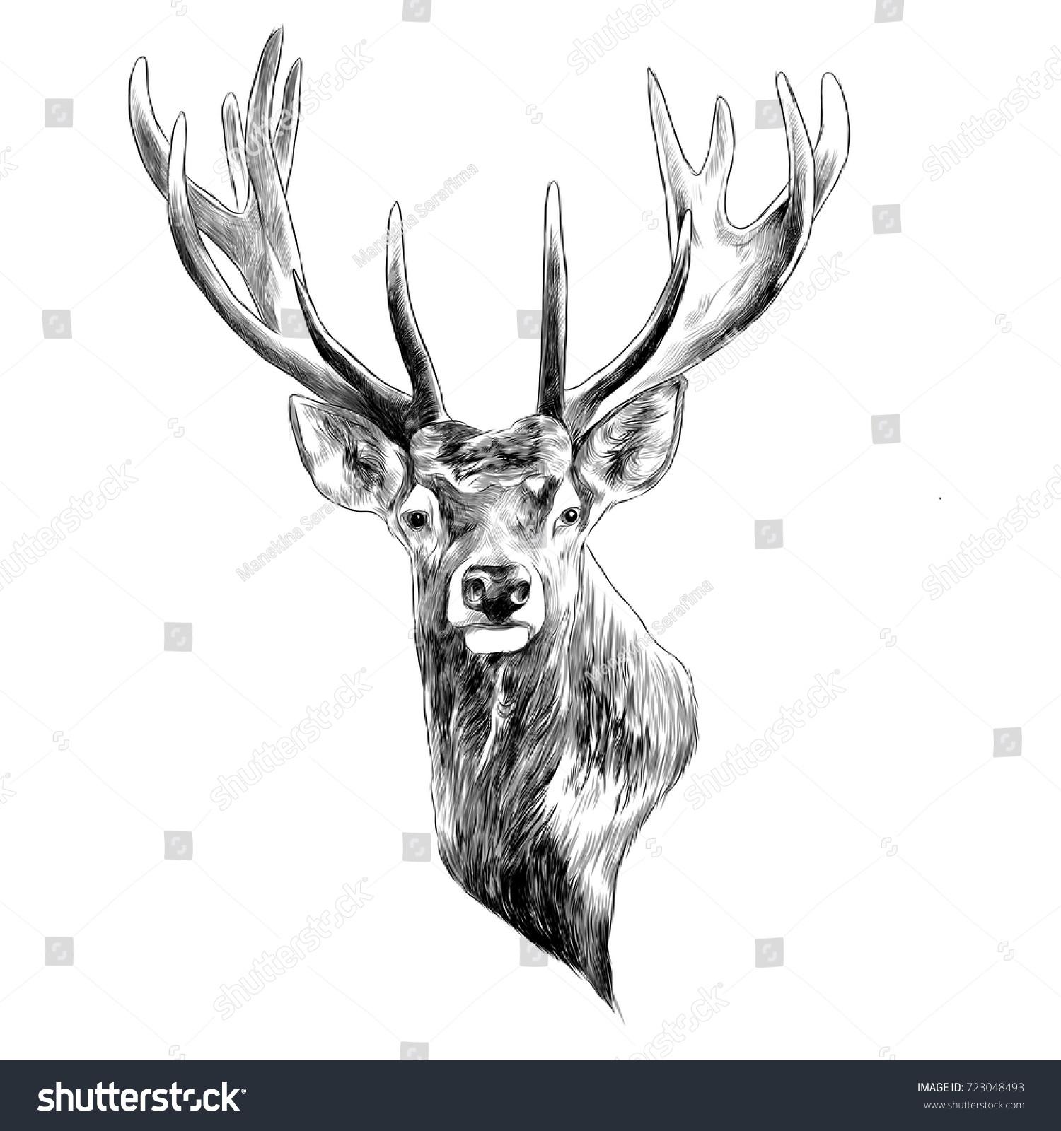 stag deer head sketch vector graphics stock vector 723048493