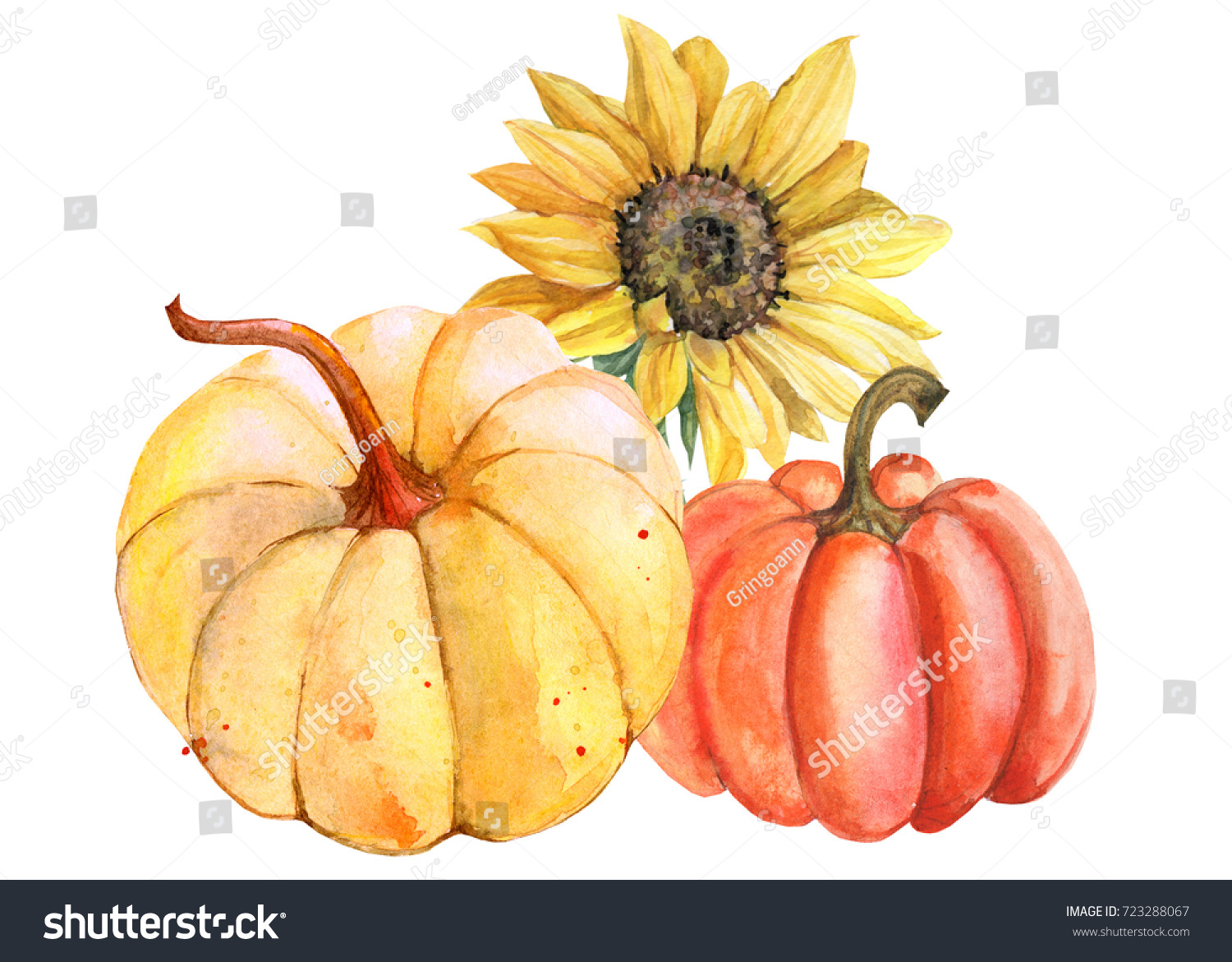 Autumn Composition Of Sunflowers Yellow And Orange Pumpkins Watercolor Botanical Illustration Postcard