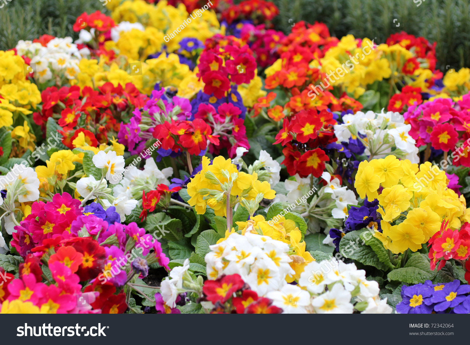 garden full of flowers stock photo 72342064 shutterstock