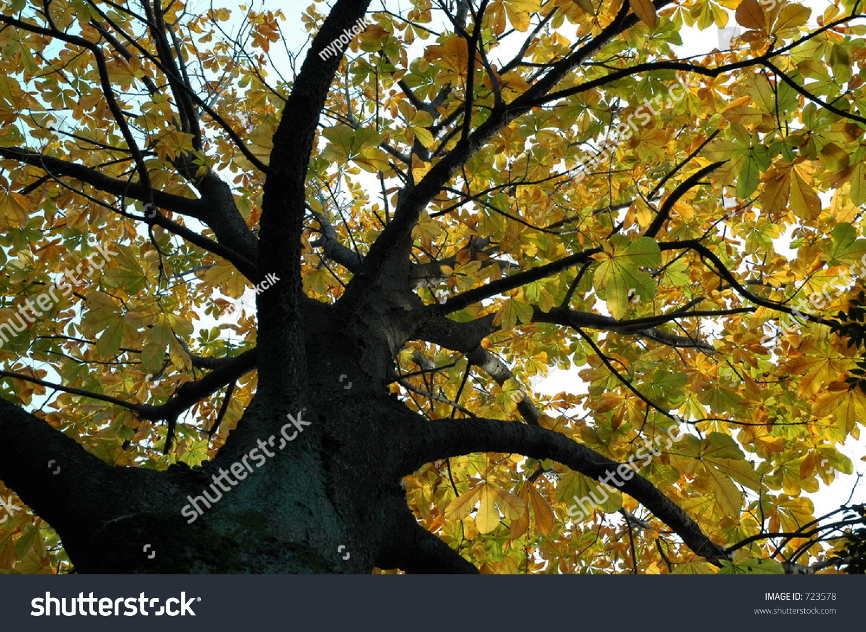 Autumn tree at meiji jingu outer garden stock photo 723578 for Outer garden