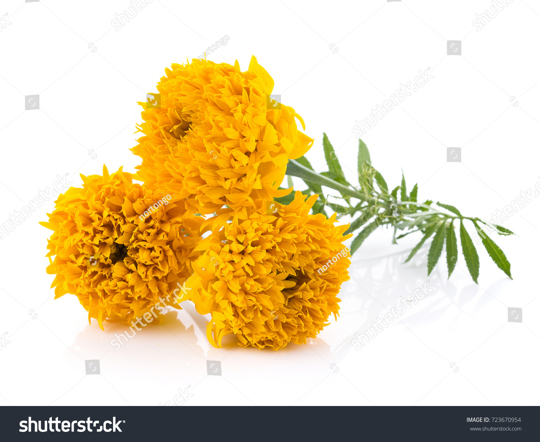 Marigold flowers on white background stock photo royalty free marigold flowers on white background mightylinksfo