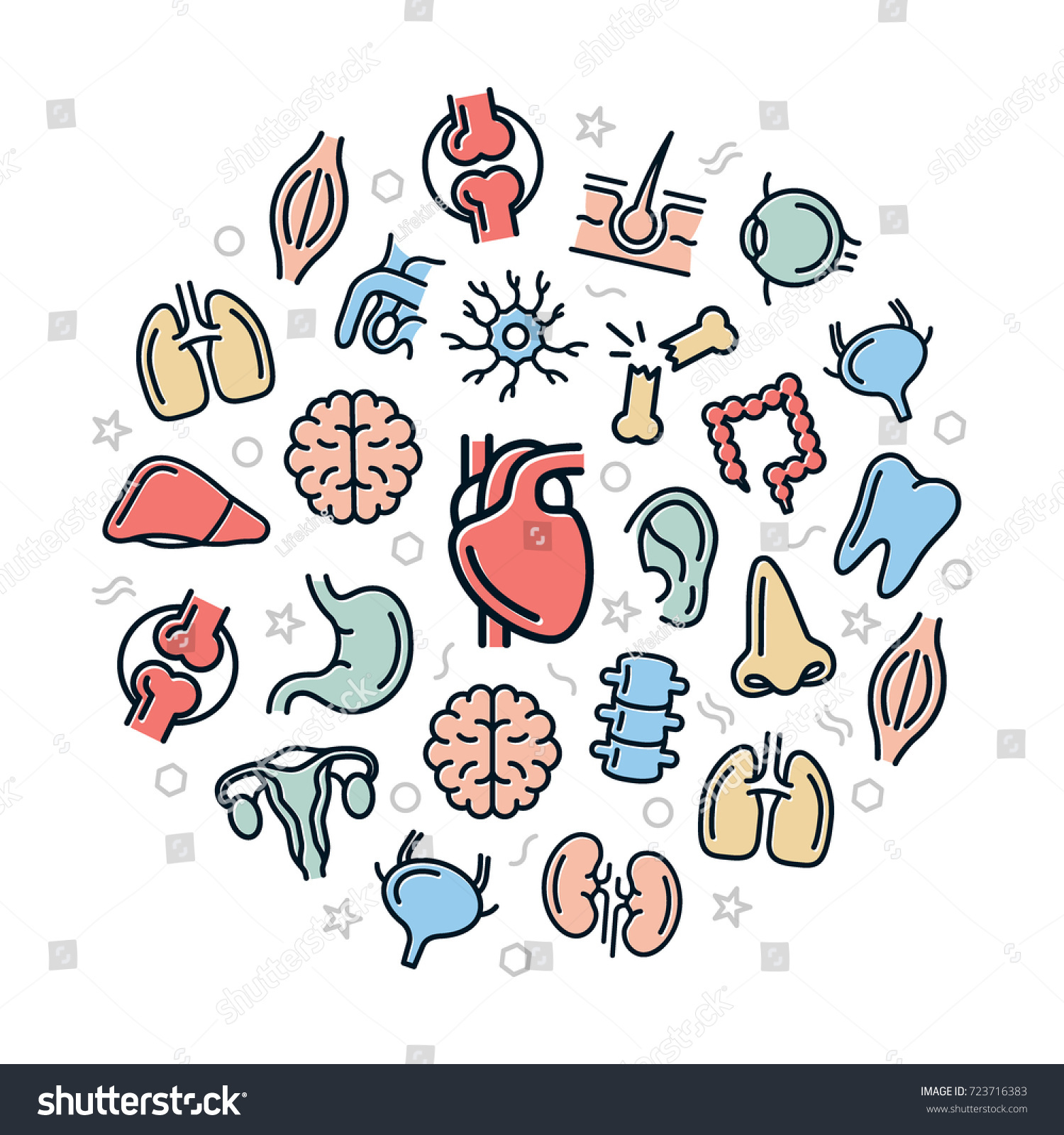 Set Vector Anatomy Organs Colored Line Stock Vector (2018) 723716383 ...