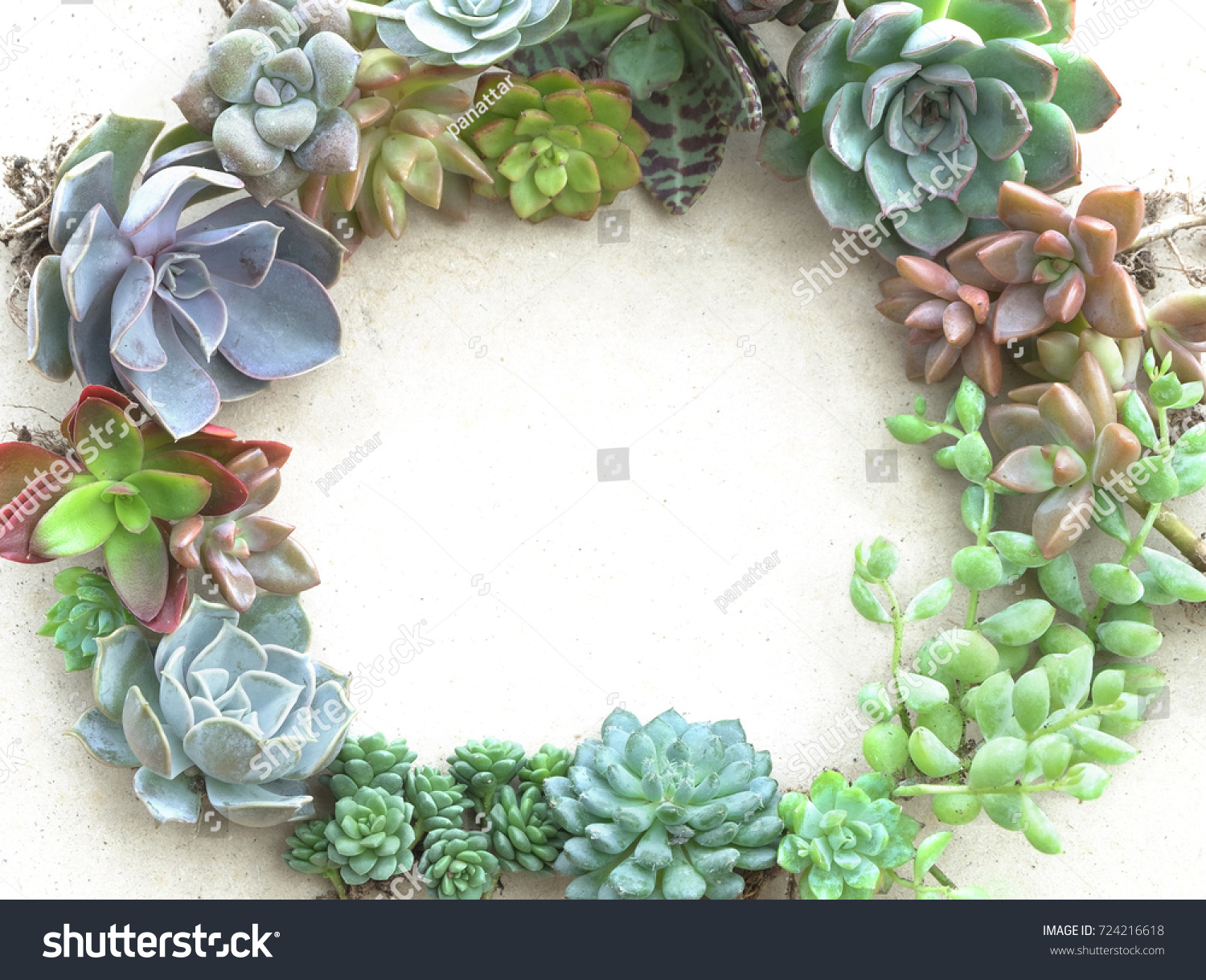 Colorful Flowering Succulent Plants Frame Background Stock Photo ...