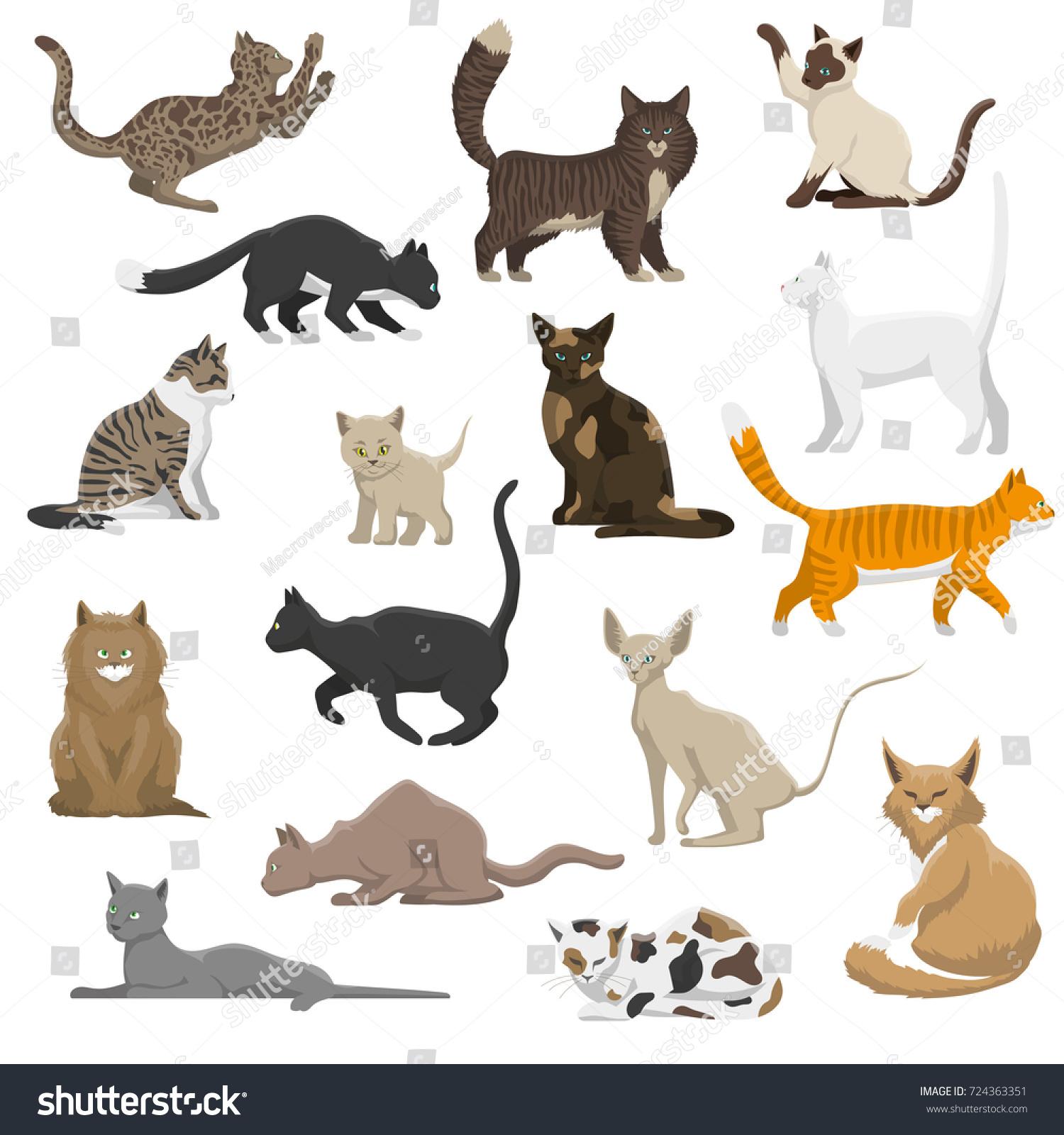 Domestic Popular Rare Exotic Cat Breeds Stock Illustration