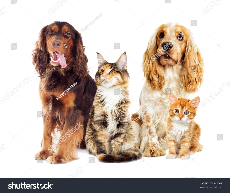 Dog Kitten White Background Stock Shutterstock