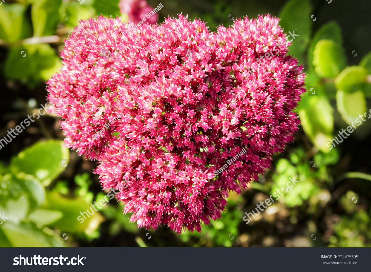 Close Small Pink White Flowers Heart Stock Photo Royalty Free