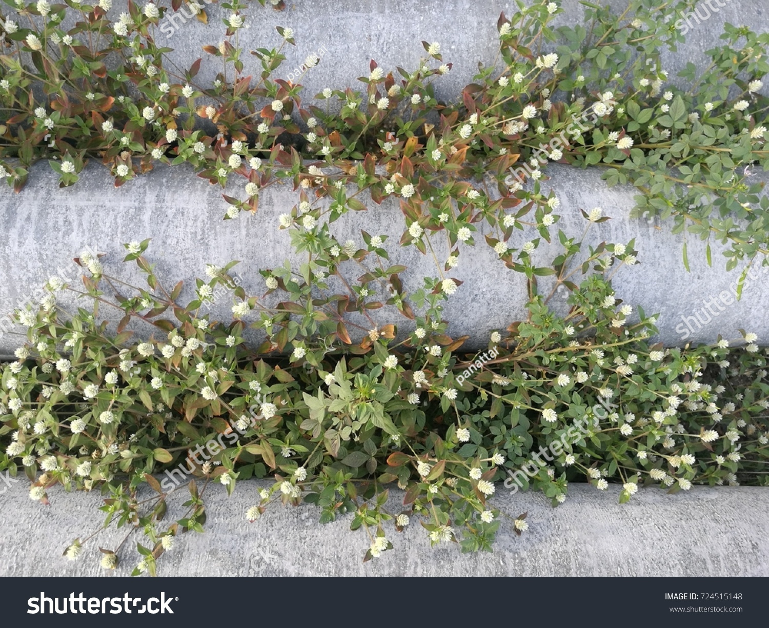 White Weed Flower Pattern Background Stock Photo (Edit Now ...