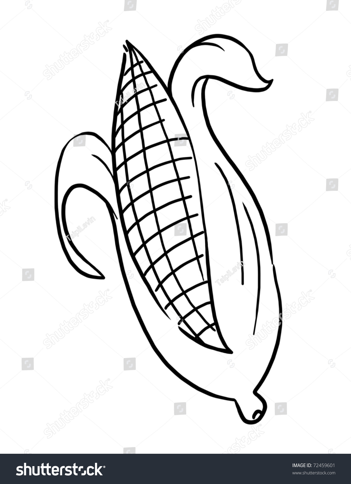 Outline Corn Illustration Ear Of Drawing Isolated On The Cob