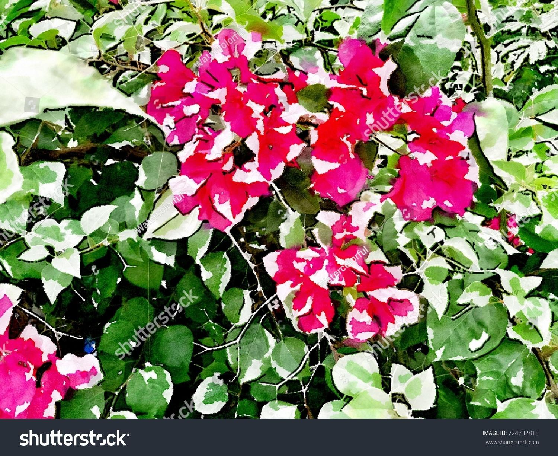 Bougainvillea Flower Tree Green Leaves Public Stock Illustration ...