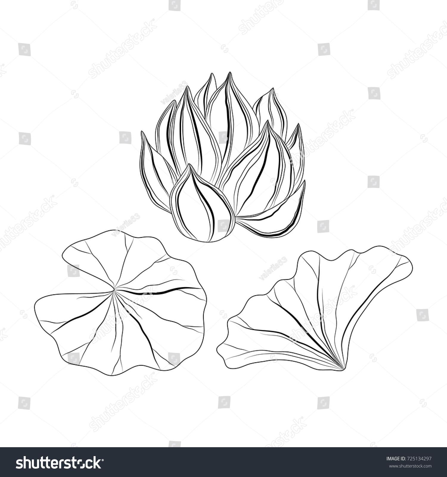 Sketch lotus flower leafsvector illustration stock vector 725134297 sketch of lotus flower and leafsctor illustration izmirmasajfo