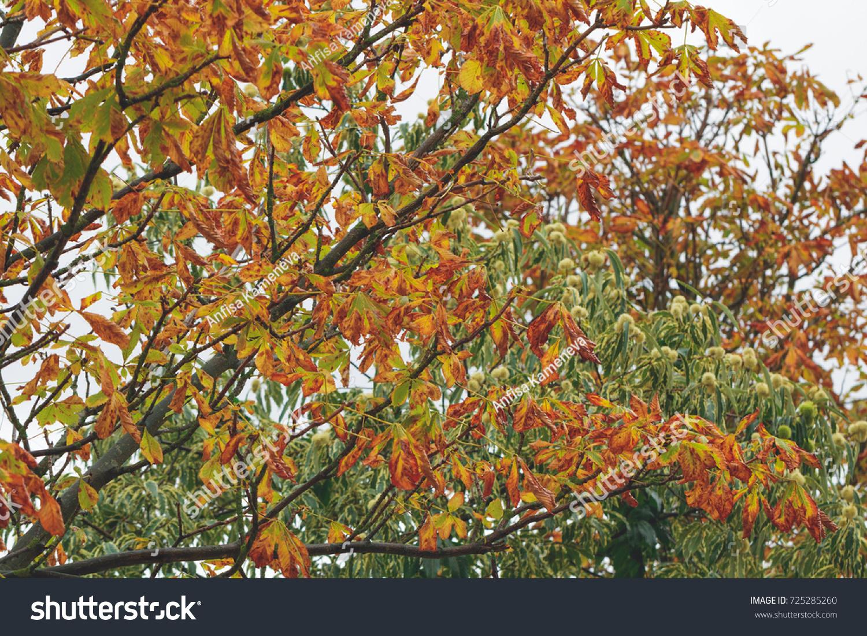 Yellow foliage of a tree in an autumn garden   EZ Canvas